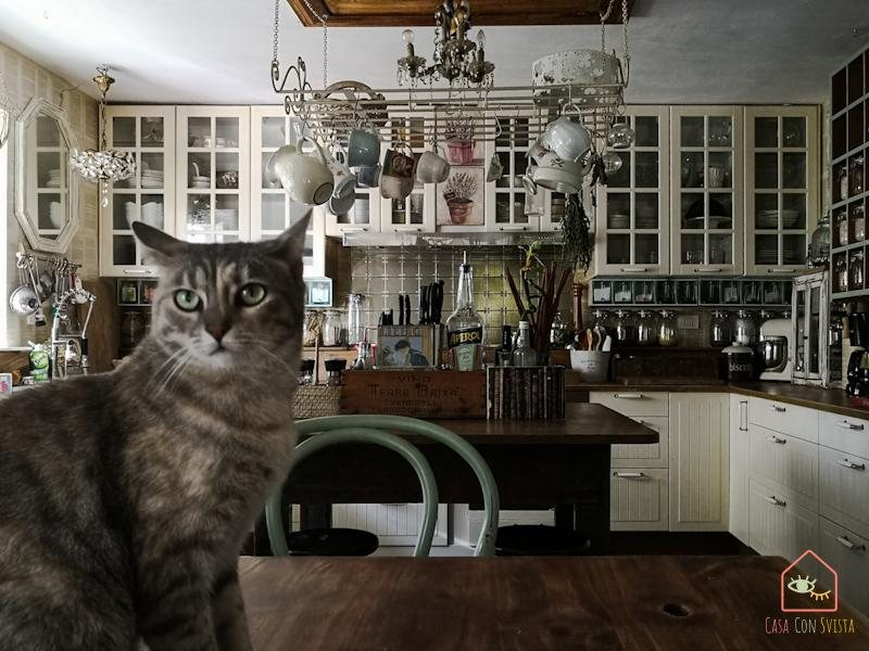 Cucina con Gatto