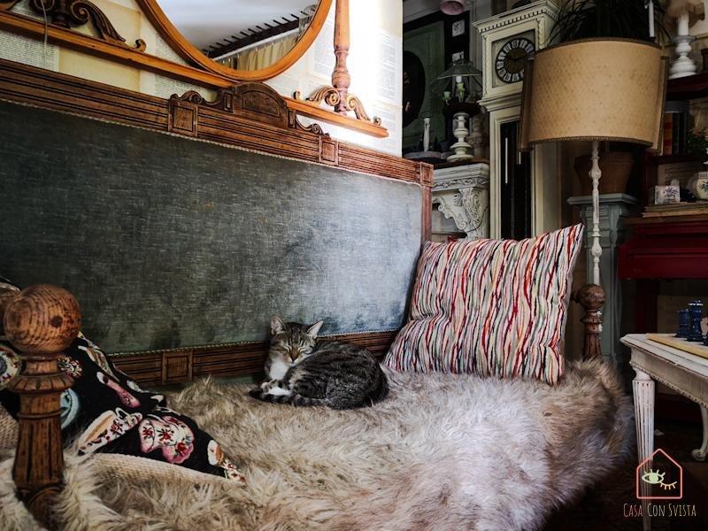 Ingresso divanetto con gatto