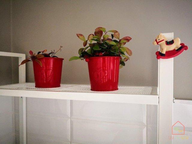 addobbi-natalizi-gaultheria