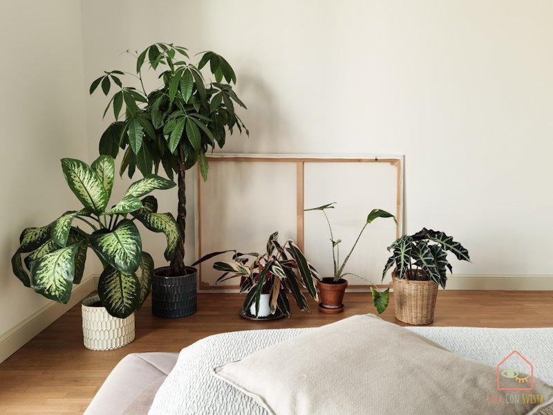 decorare-casa-fiori-piante