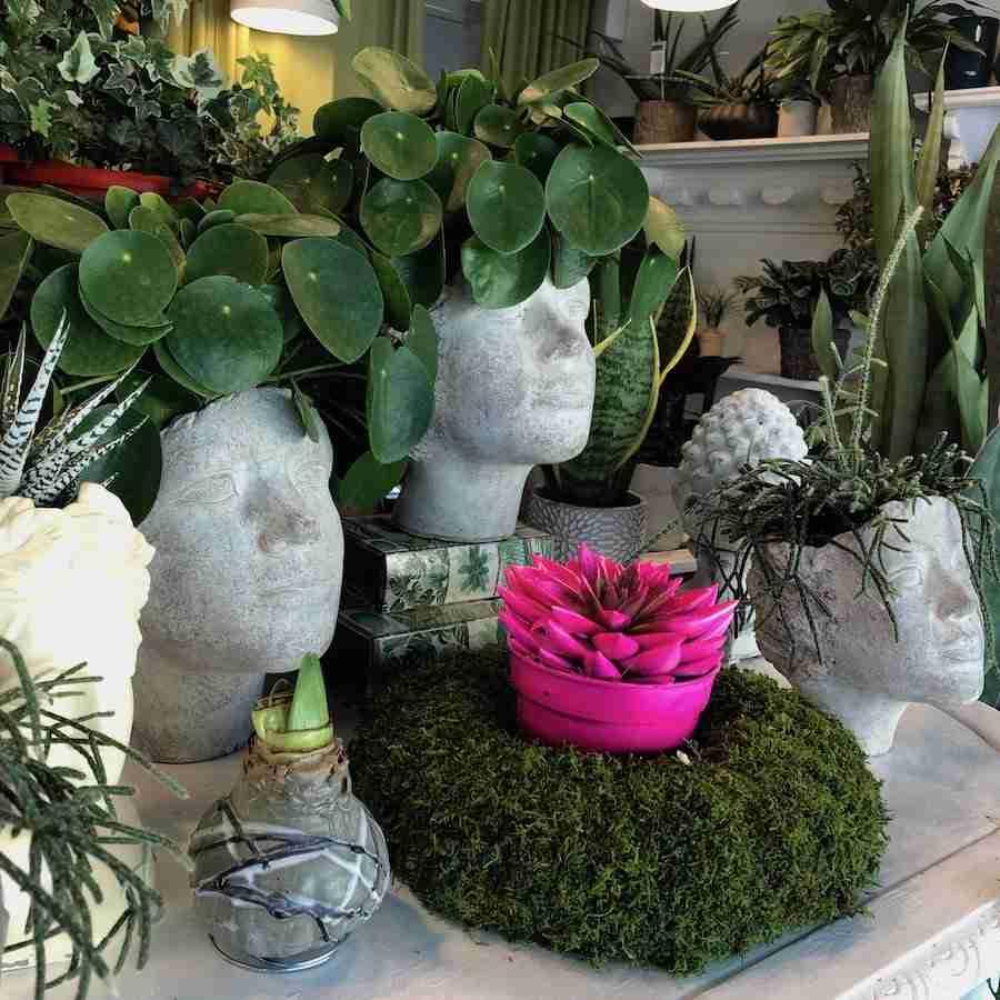 piante-vasi-teste