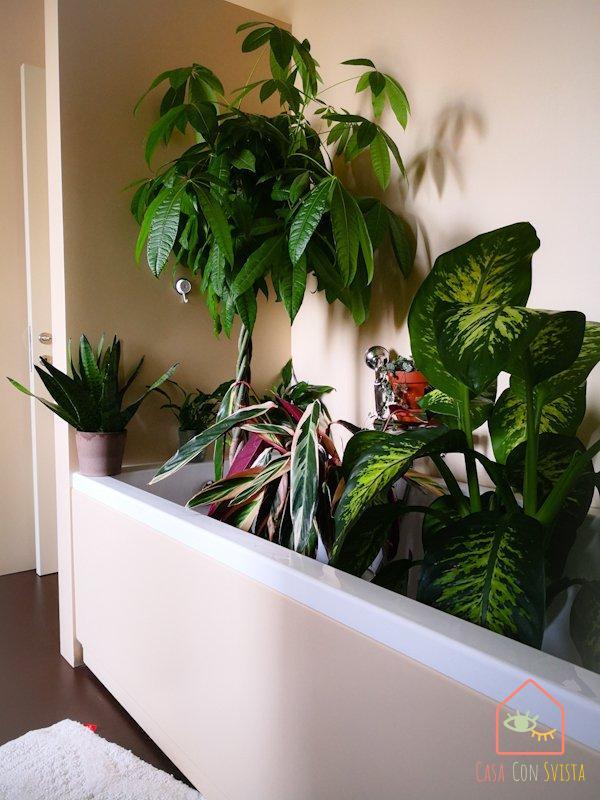 piante-vasca