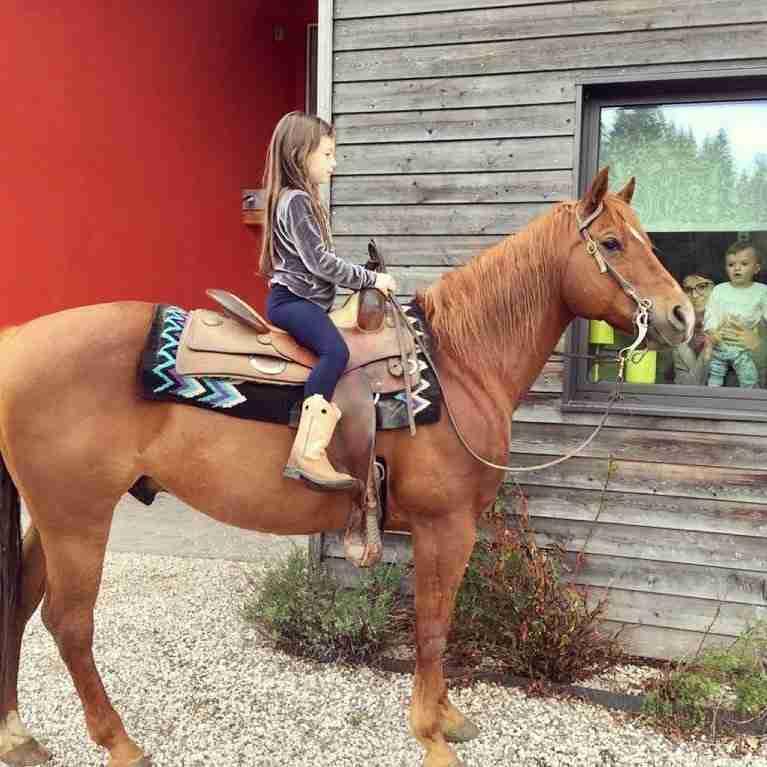 bblupo-cavallo-famiglia