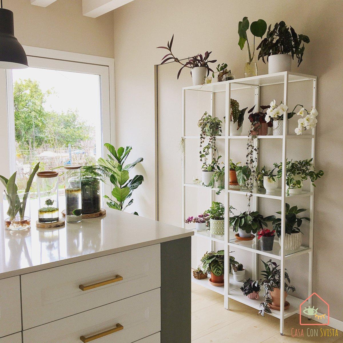 piante-casa-verde-salvia